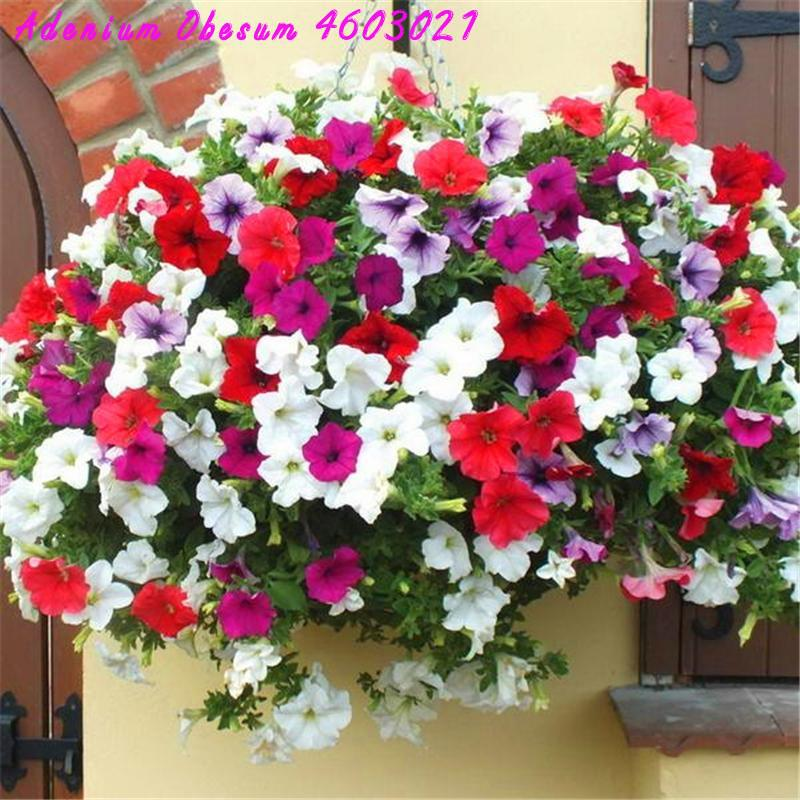 2019 Promotion! 100 Pcs Hanging Rare Mixed Petunia Perennials, Melissa Plant Original Flower Family Garden Bonsai Planting