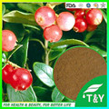 100% organic camu camu fruit extract powder with rich natural Vitamin C