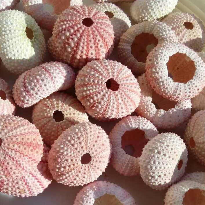 HappyKiss Natural sea urchins pink dream sea urchin shell design window decoration decoration Mediterranean home DIY wall