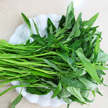 Water Spinach Seed, Vegetable Seeds, 100pcs/pack