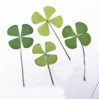 Green Clover Specimens DIY Handmade Material Dried Press Flower 1 Lot 100pcs Wholesale Free Shipment
