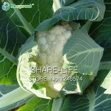 Free Shipping 100 Vegetable Cauliflower Organic Seeds Tasty Easy Growing DIY Home Garden Plant(China)