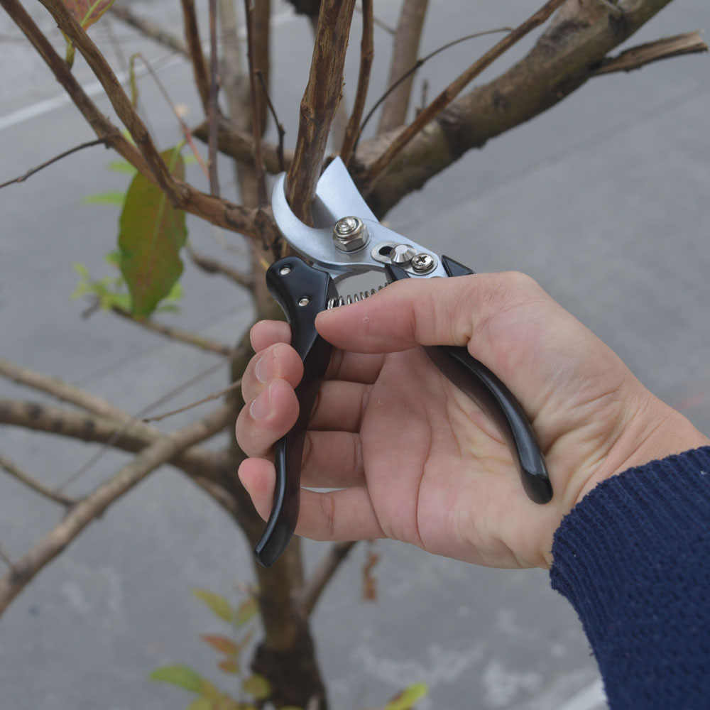 Ferramenta de enxertia Podadores Tesouras Bonsai Poda de Árvores De Fruto de Aço SK5 Tesoura de Jardim Tesouras de Jardinagem Tesoura de Jardim 3 cores