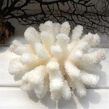 Árvore coral branca de 12-14cm 100% natural, ornamento de decoração para aquário, paisagem, árvore coral branca do mar