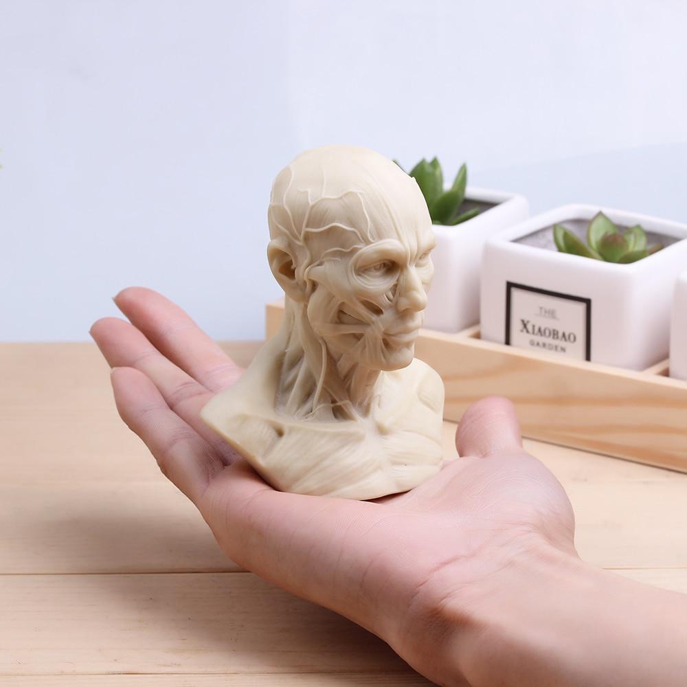 Buste Sur Pied Decoratif ᗜ Ljഃhauteur 10 cm art muscle humain tête sculpté ferrite