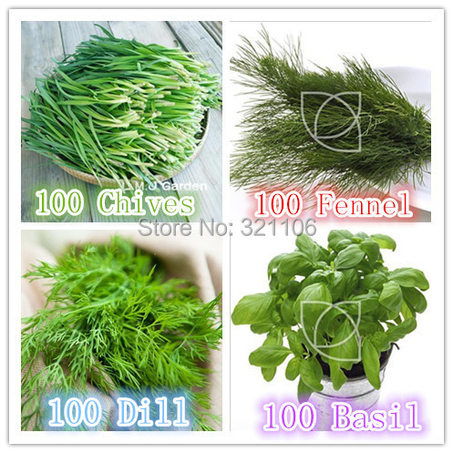 Free ShippingHeirloom Herbs 4 Varieties, Basil Dill Chives Fennel DIY Home  Garden Bonsai Easy Growing