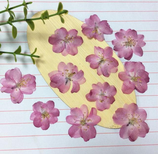 120pcs Pressed Pink Dried Skura Flower Plant Herbarium For Jewelry