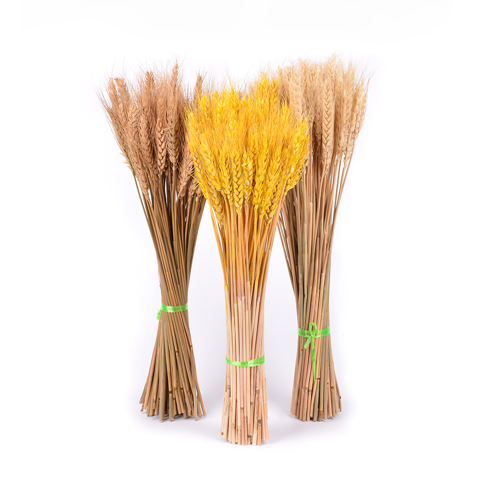 Natural dried flower 12