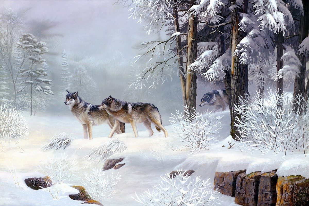 wolves winter forest couple ice world snow trees animal. Black Bedroom Furniture Sets. Home Design Ideas