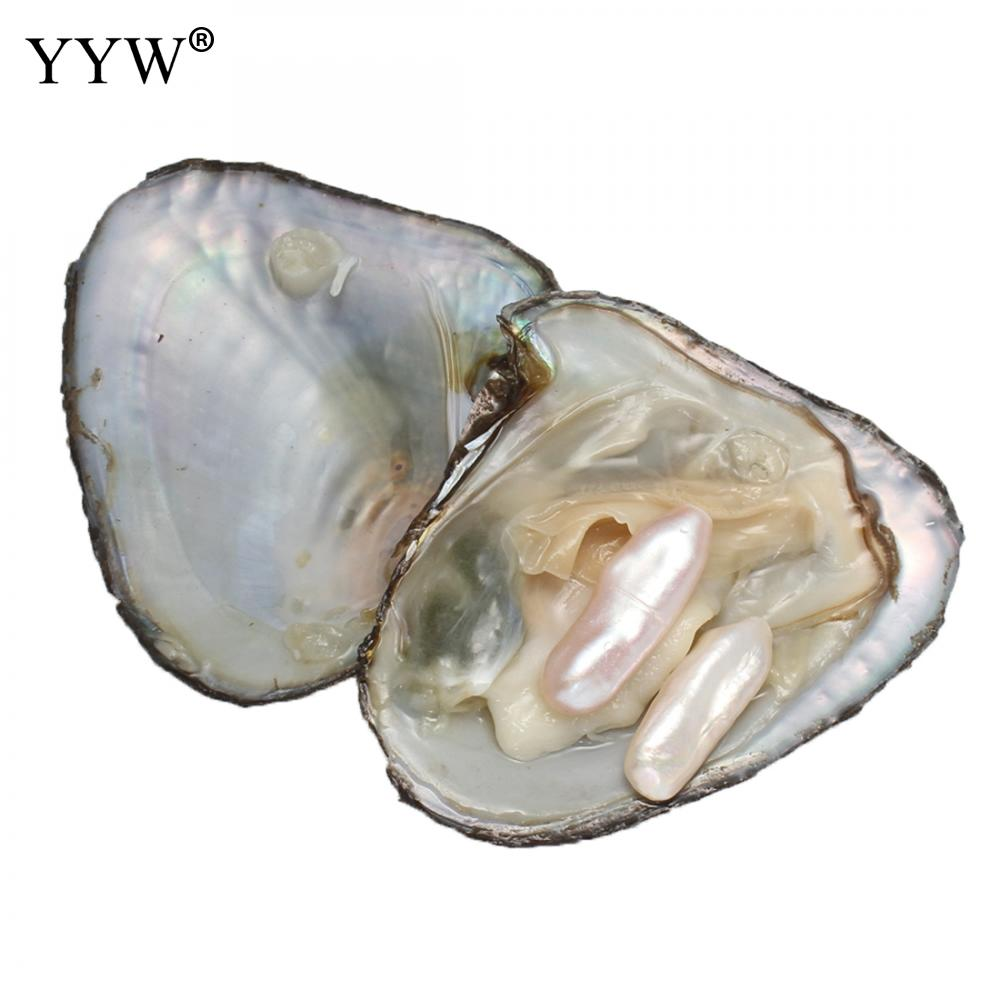 Mussel Shell Freshwater Oyster wish Pearls 2 Color 7-8 mm One Pearl Oyster with One Pearl Real Pearl Vacuum Pack Inside