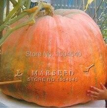 20 seeds Big Pumpkin Seeds Giant Pumpkin vegetable plant Free Shipping
