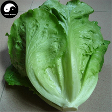 Buy Lettuce Vegetables Seeds 200pcs Plant Green Salad Vegetable Lactuca Sativa