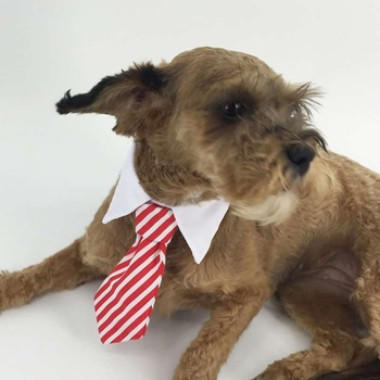 Gentleman Pet Dog Tie Stripe Cat Bow Tie Puppy Necktie For Small Dogs Collar Grooming Bright