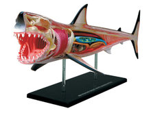 4d Shark Animal Anatomy Model Skelekon Medical Teaching Aid Laboratory Education Equipment master puzzle Assembling Toy(China)