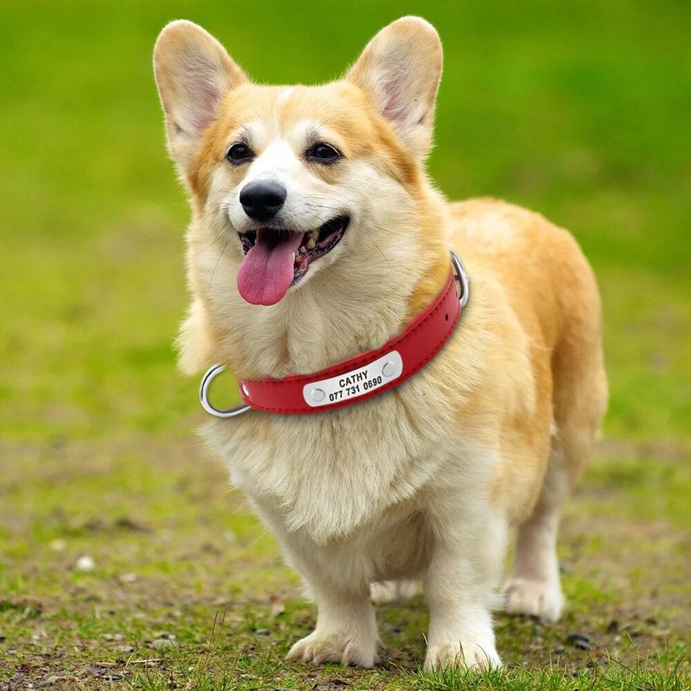 petit collier chien personnalisé cuir