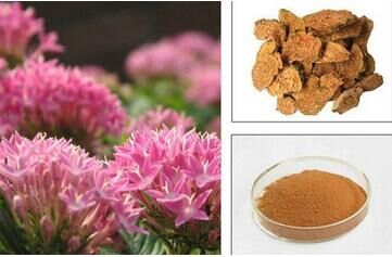 Hot sale GMP Factory supply Rhodiola extract Powder 99% purity Rhodiola Rosea Extracts maximum strength anti-aging free shipping gmp factory supply deer antler velvet extract powder 10 1