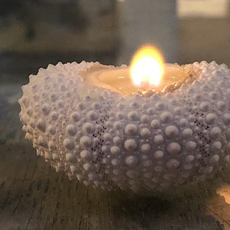 Free Shipping(4 Pcs/lot)Natural Sea Urchin Aromatherapy Candle For Wedding Decor Coastal Home Decor Craft Seashells
