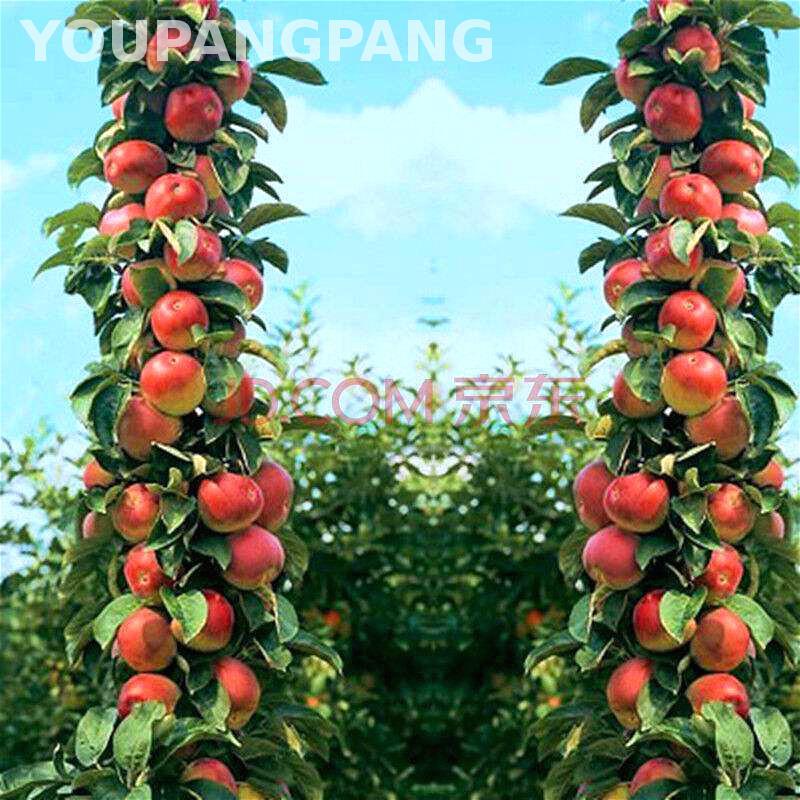 20pcs/bag Apple Seeds Bonsai Big Apple Tree Seed Organic Vegetable Fruit Seeds Indoor Plants For Home Garden Plants . Sementes