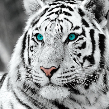 DIY 5D Full Diamond Painting Cross Stitch White tiger Embroidery Needlework Patterns Rhinestone kits