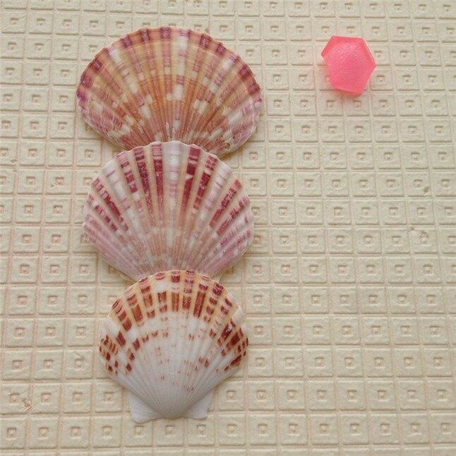 seashell5