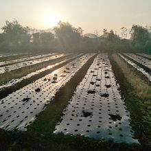 10m*95cm 5Holes Home Garden Film Agricultural Vegetable Black Film Plants Plastic Perforated Plastic Mulch Mulching Membrane