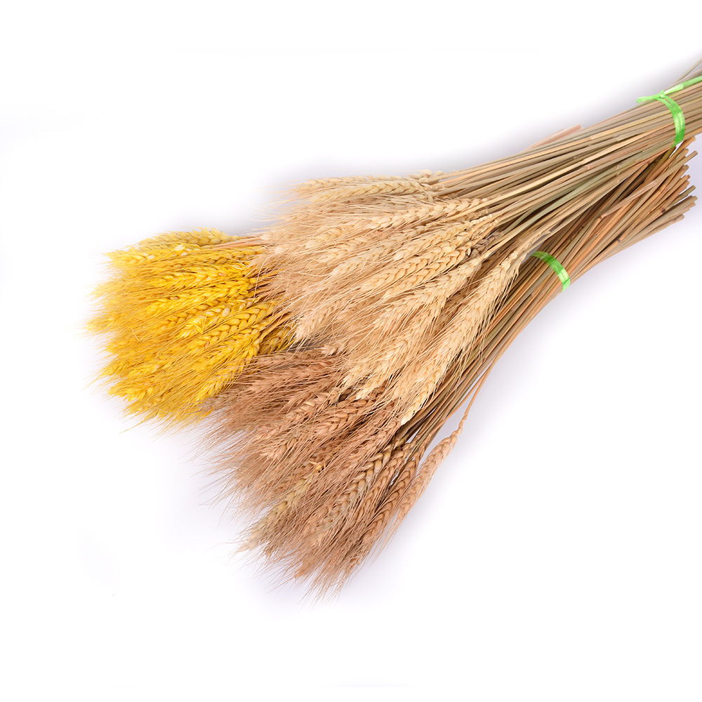 Natural dried flower 15