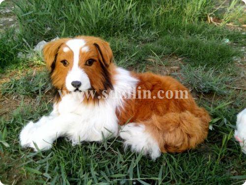 Direct manufacturer / lovely dog toy ,dog toy for home decoration, 50*24*26 cm