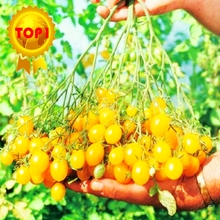 500pcs sweet  Tomato Seeds cherry  mini yellow vegetables seed fruit seeds bonsai potted plants home & garden