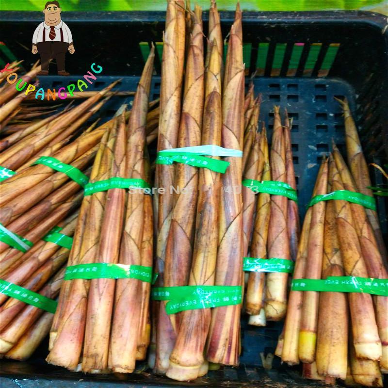 50pcs/bag Moso Bamboo Seeds. Ornamental And Edible Phyllostachys Heterocycla Pubescens Plants Seeds For Diy Home Garden Bonsai