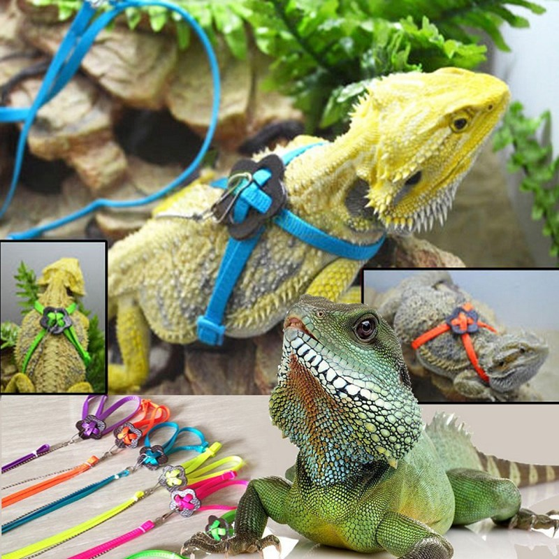 Reptile Lizard Harness Leash Polyester Adjustable Hauling Cable Rope Small Animal Collar Pet Style Durable Multicolor 6 Color
