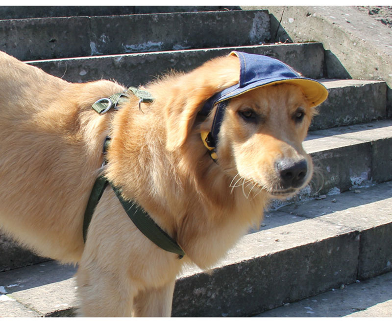 Pet Dog Outdoor Cap Cool Denim Hat Small Summer Sun Protection Cap for Dog Doggy