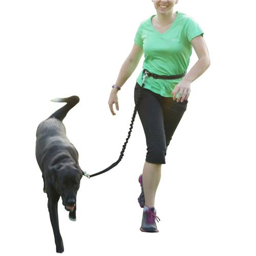 Home Latest Collection Of Hands Free Dog Leash Set For Running Walking Dog Walking Belt Retractable Bungee Dog Leash