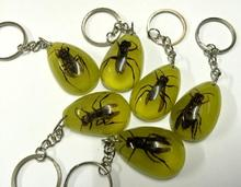 FREE SHIPPING 12 pcs real honeybee crazy jewelry luminous color keychain