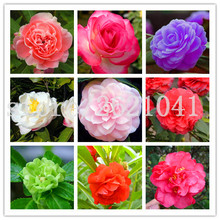 100PCS / bag camelias impatiens finger flower balsamina garden balsam Flower Jardin Plants Bonsai