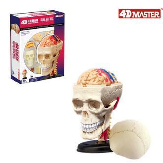 4D Skull Model 39 Parts Human Anatomy Model, New 3D Skull