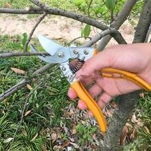 Sk5 секаторы садовые ножницы Садоводство фруктовые для резьбы