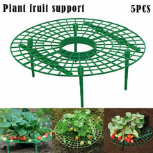 5pcs Strawberry Shelf Plant 30cm Green Plastic Growing Supports Keep Fresh Frame Climbing Vine Circle Removable(China)