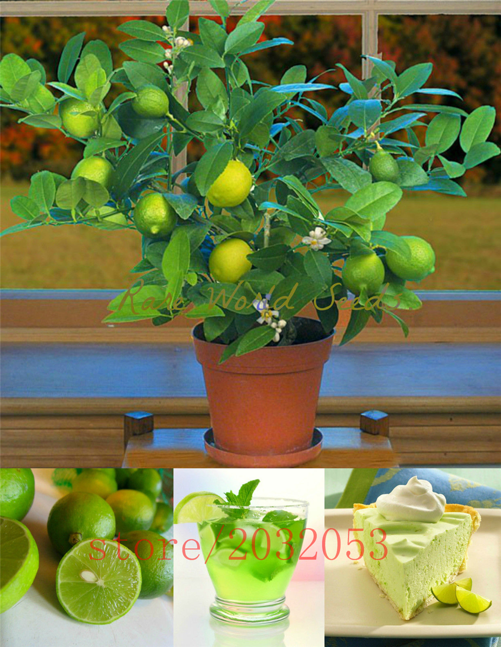 20pcs/bag kaffir lime bonsai, lime ,organic fruit BONSAI fruit lemon tree  for home garden