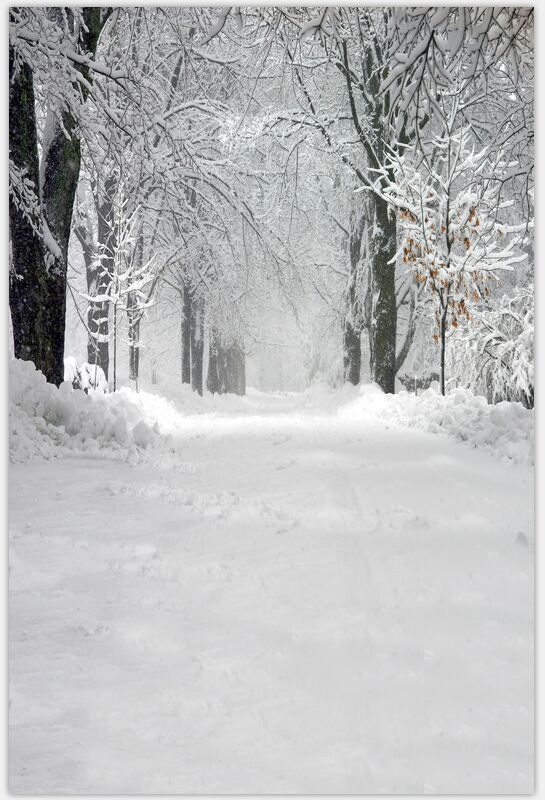 8x12ft Custom Background Snow Winter Trees Road Snowy