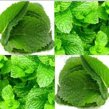 1 Bag 400 NON-GMO Mint Mentha Seeds Fresh Culinary Medicinal DIY Home Garden Plant