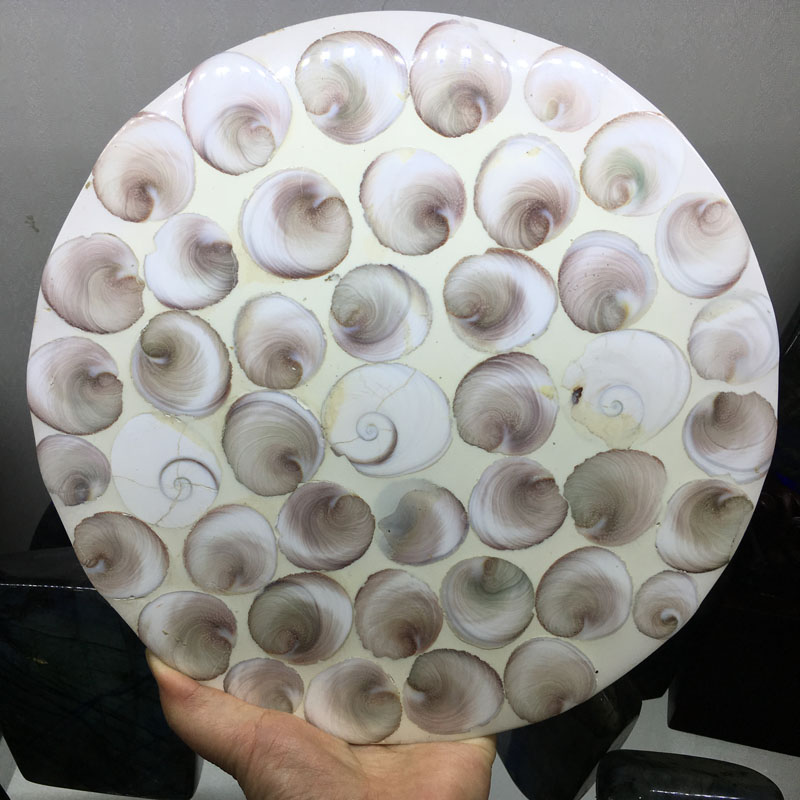 1pcs 920g+ Natural Ammonite Shell Fossil Disc Madagascar whole ammonite fossil plate shell snail fossil Fengshui1pcs 920g+ Natural Ammonite Shell Fossil Disc Madagascar whole ammonite fossil plate shell snail fossil Fengshui