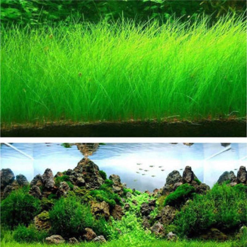 Fish Tank Aquarium Plant Seeds Aquatic Water Grass Decor Rock Lawn Garden Foreground Plant