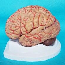 Модель человеческого мозга Цереброваскулярная модель 8 частей Анатомия мозга модель обучение медицине модель образовательные принадлежности