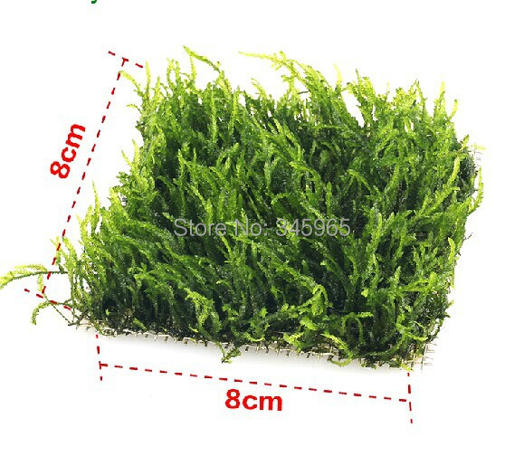 Free Shipping Alive Aquascape Moss Aquascape Fish Tank Aquarium Plants Moss  Set 8X8 CM