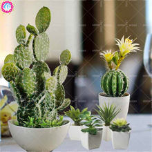 50pcs mixed cactus seeds Real Prickly pear succulent plant seeds Lithops bonsai planting for DIY home garden supplies potted