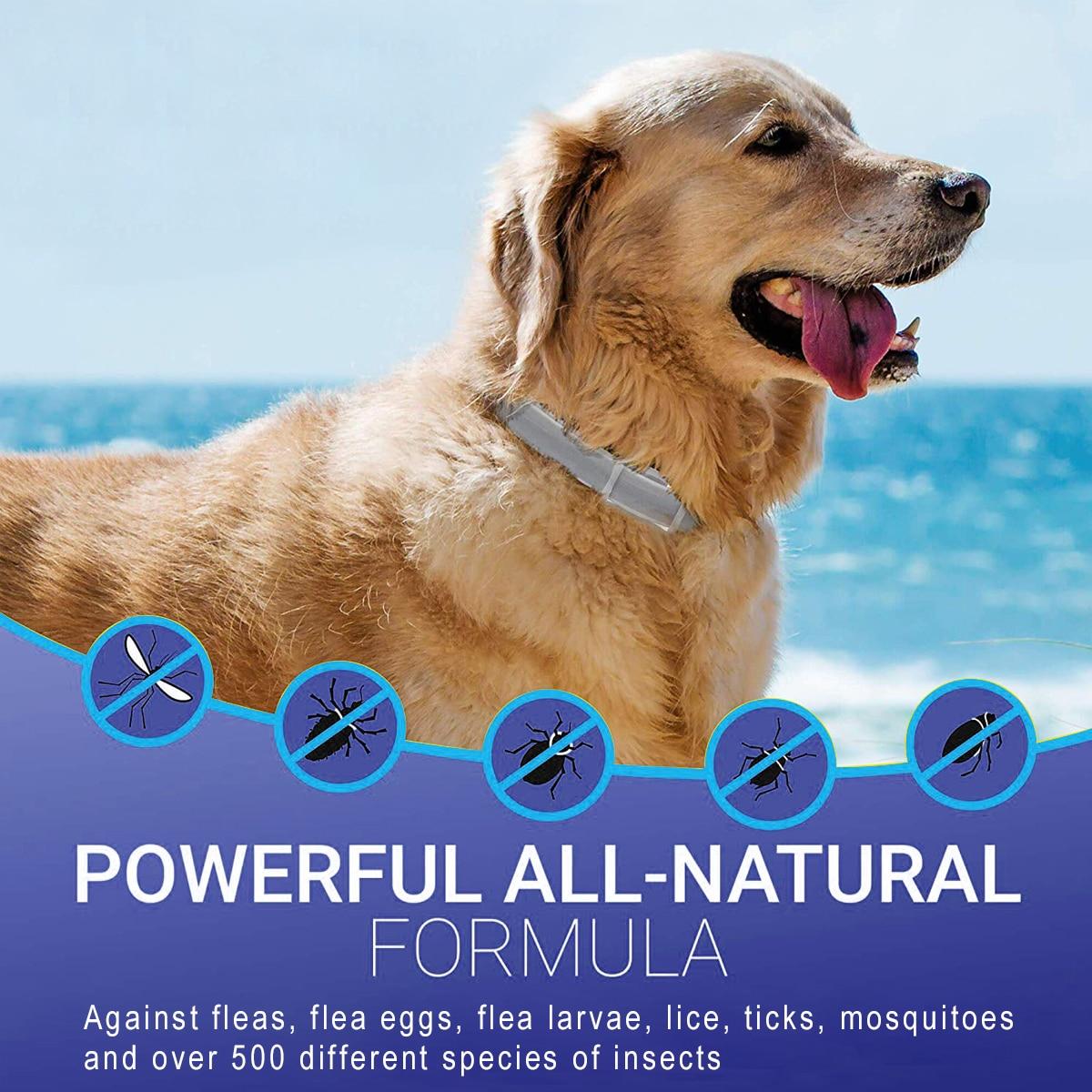 Dewel Pet Collar Anti Flea Outdoor Protective Collars 30 » Pets Impress