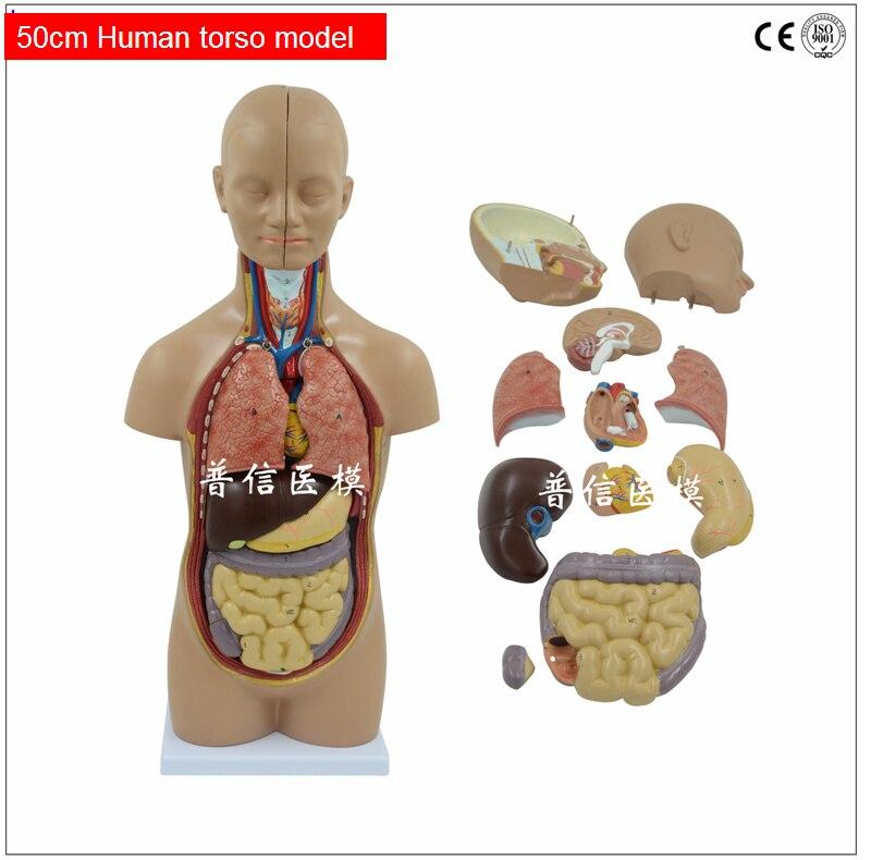 Gratis verzending & Menselijk lichaam model. 12 onderdelen anatomie ...