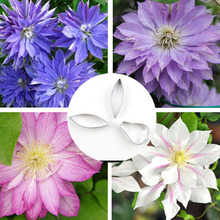 New DIY Clay Clematis Lotus Flower Stainless Steel Cutting Mold Pottery Ceramic Polymer Tools Petal Pattern Cutter