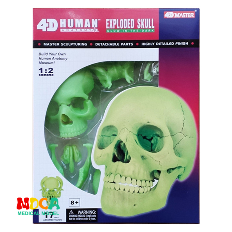 Fluorescent chromatic bone 4d master puzzle Assembling toy human body organ anatomical model medical teaching modelFluorescent chromatic bone 4d master puzzle Assembling toy human body organ anatomical model medical teaching model