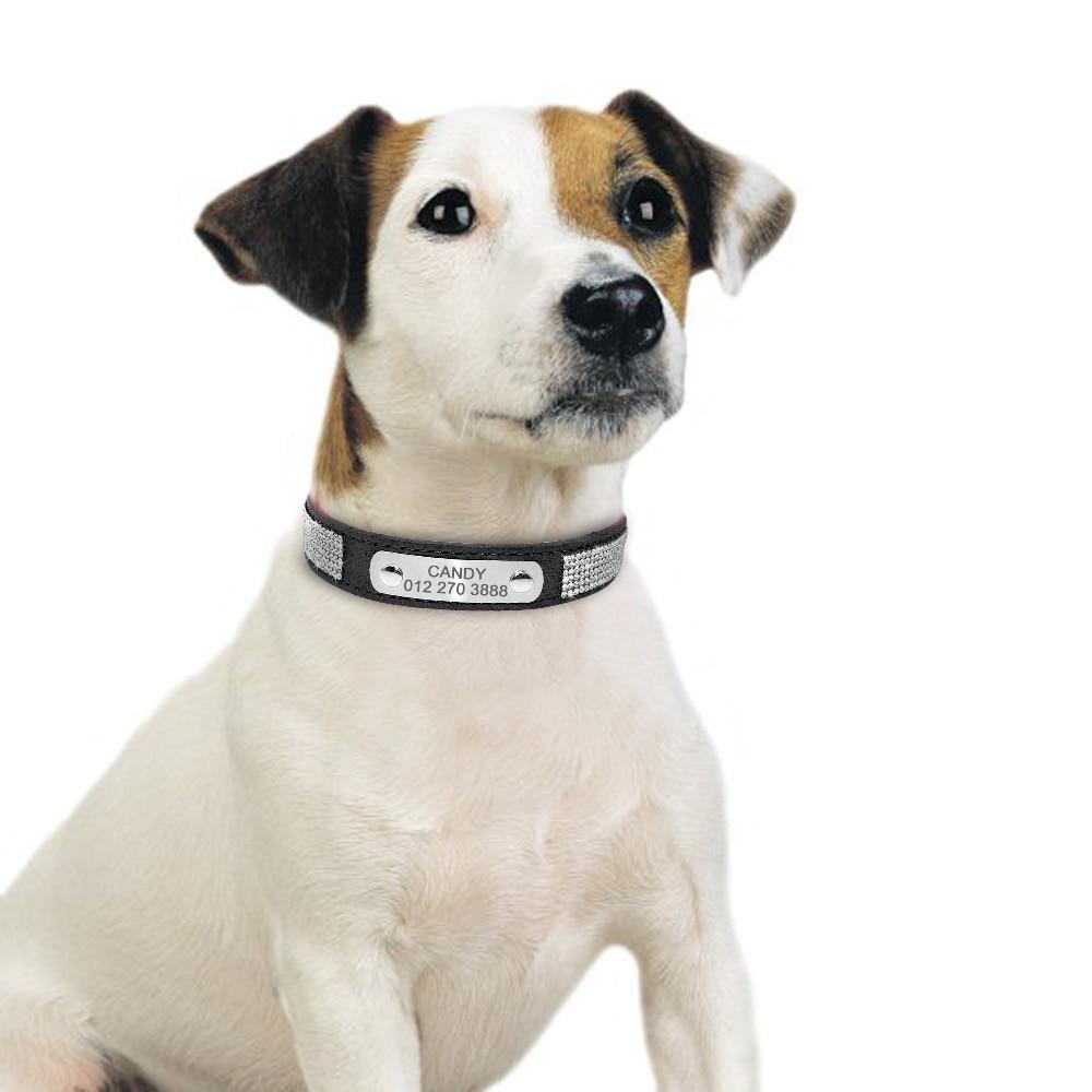 collier chien personnalisé strass anti rouille